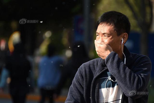杭州梧桐树飞絮严重 部分市民建议换一种行道树