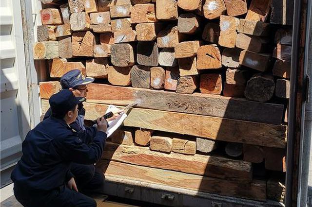 宁波口岸首次在进境红木中截获有害生物家具窄吉丁