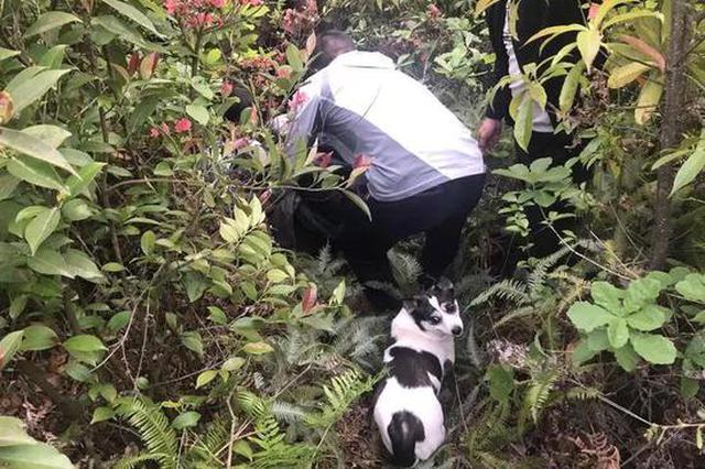 金华95岁老人走失 5年前收养的流浪狗领民警走进深山