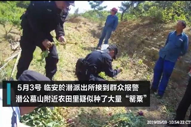 绍兴一老人为治牙疼在杭州种了一片花海 结果被刑拘