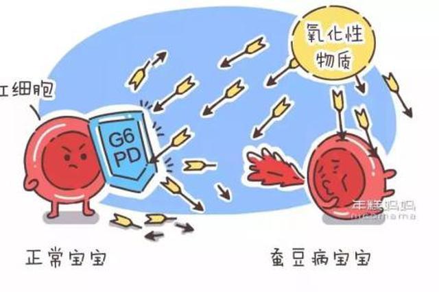 浙江一名4岁男孩重度贫血 问题出在一道家常菜上