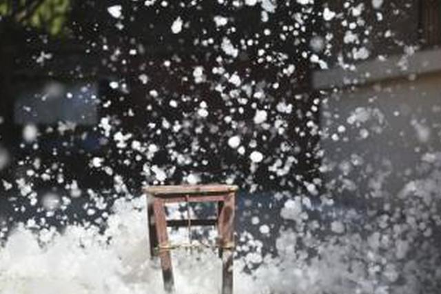 杭州启动悬铃木飞絮控制试验 预计明年春季见初效