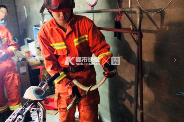 比人还高 杭州居民家中现1.7米重约2斤大蛇(图)