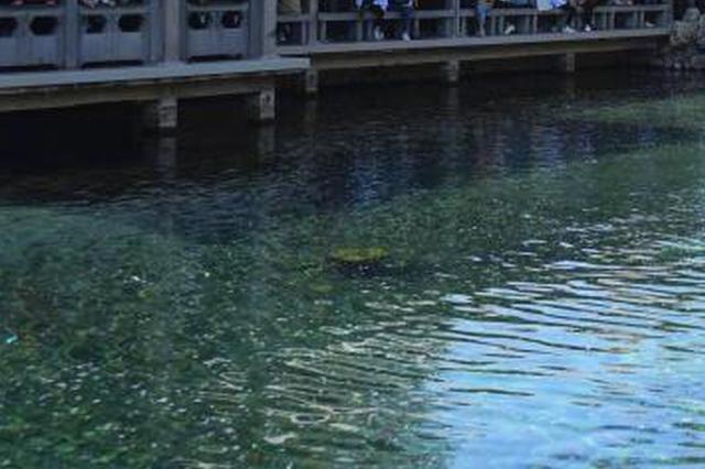 杭州83岁大伯西湖里擅自游泳 心痒难耐凌晨4点摸瞎游