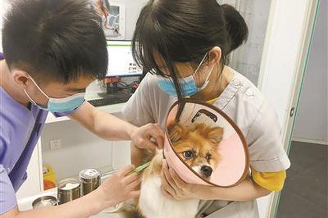杭近期内将推出犬只芯片注射的服务 相关工作正准备