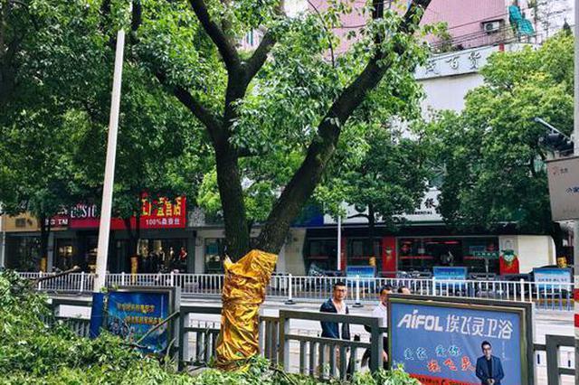 树木太茂盛遮盖了广告牌被砍 浙1广告公司被罚2.1万