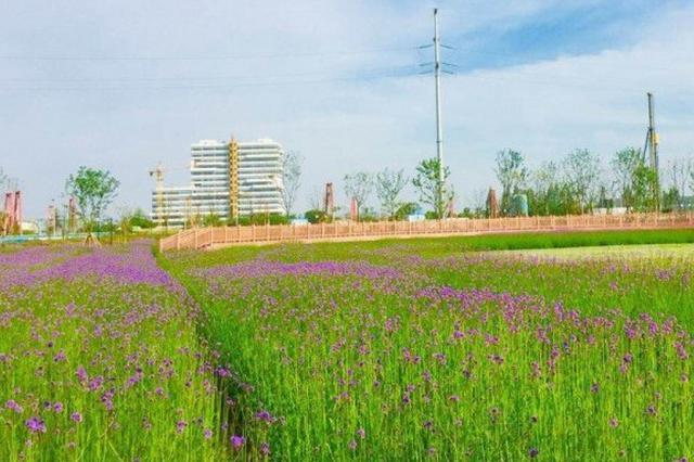 杭州把农园搬进市中心 系全国首个有20个足球场大