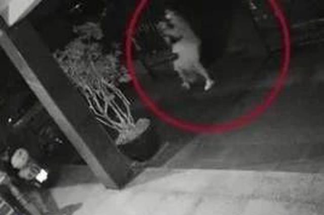湖州1女子深夜回家遇劫匪 监控视频让人直冒冷汗
