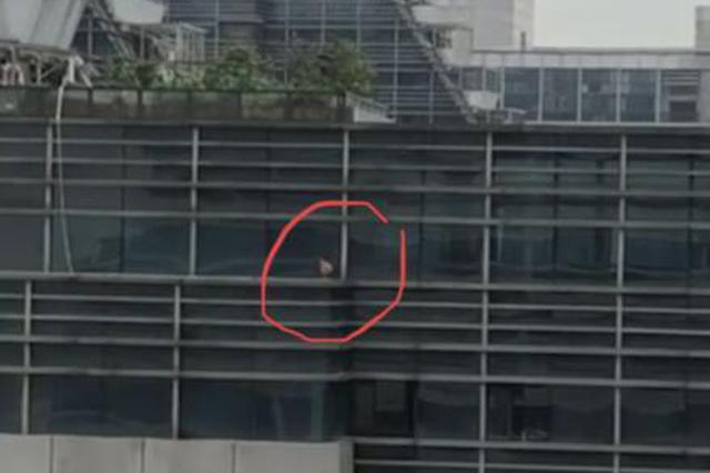杭州1只鸡被困21层高楼平台7天 城管保安都束手无策