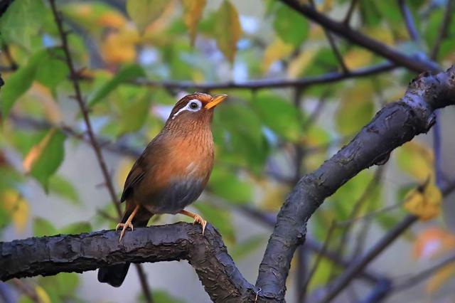 浙江荷地林业站抓获一非法捕鸟人 起获17只画眉鸟