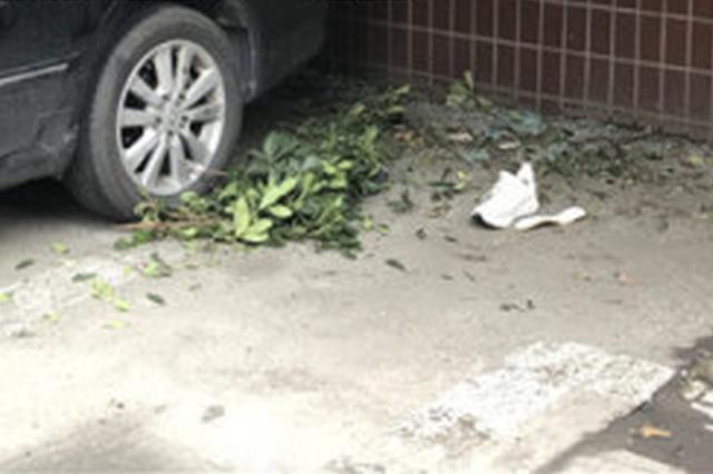 杭州有人从12楼坠楼砸在车上 目前正在抢救(图)
