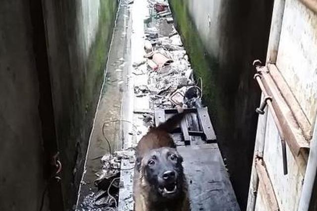 浙江一男子醉酒要跟狗吵架打架 被行政拘留5日