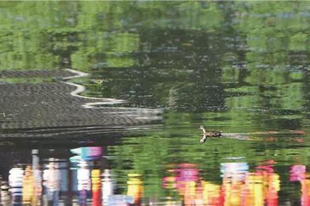 杭州十二时辰都是雨雨雨 入伏仿佛过了一个假夏天