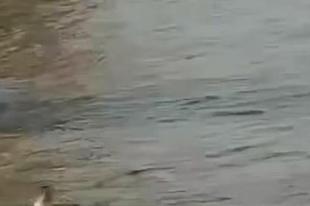 3名男子在钱塘江边被潮水冲走 市民用鱼竿救起两人