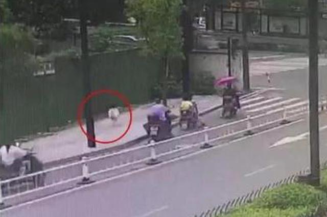 杭州2岁半小孩从暑托班溜出 在车流如织大马路上狂奔