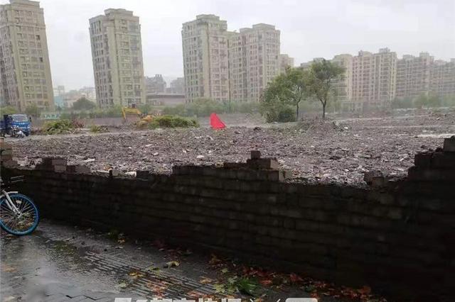 杭州1围墙倒塌砸伤过路女子 西湖60年老树被台风吹倒