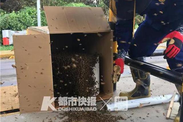 浙1收费站近3万只蜜蜂越狱 消防员大部分都捉拿归巢