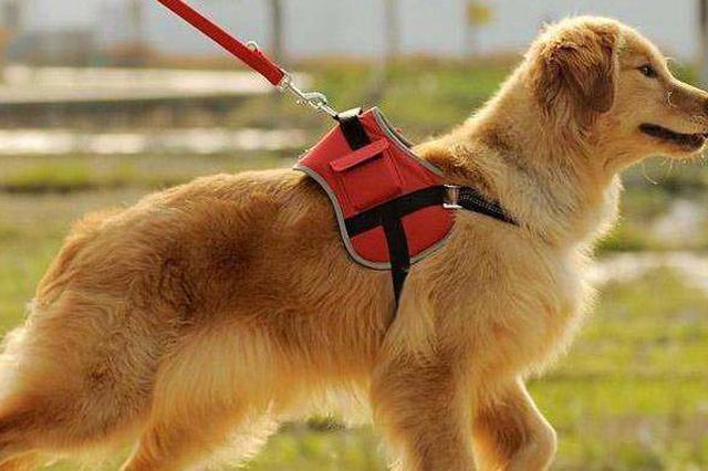 杭西湖区遛犬区本周六开园 江干区宠物医院可办狗证