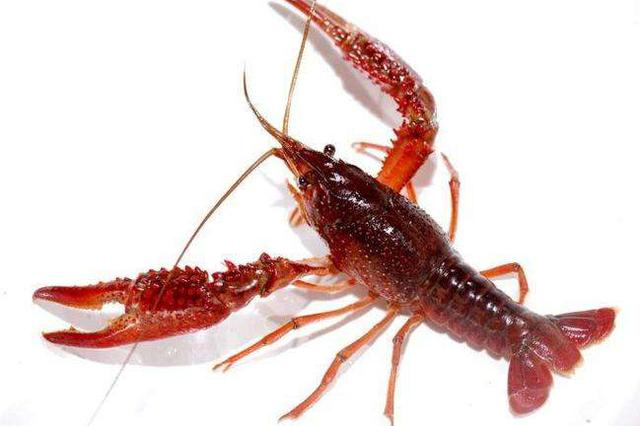 贪吃了几只小龙虾 杭47岁女子突然失声恐有生命危险
