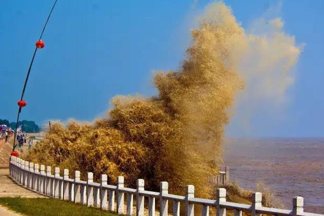 浙江一年一度的盛事又来了 钱塘江观潮攻略请收好