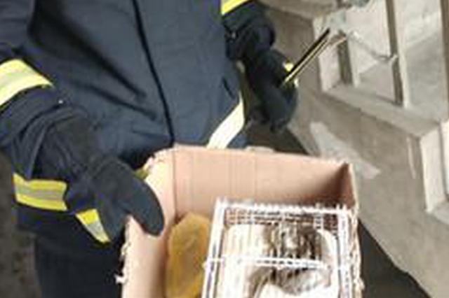 杭州1大姐家的仓鼠被蛇吃了 蛇因吃得太饱被卡笼内