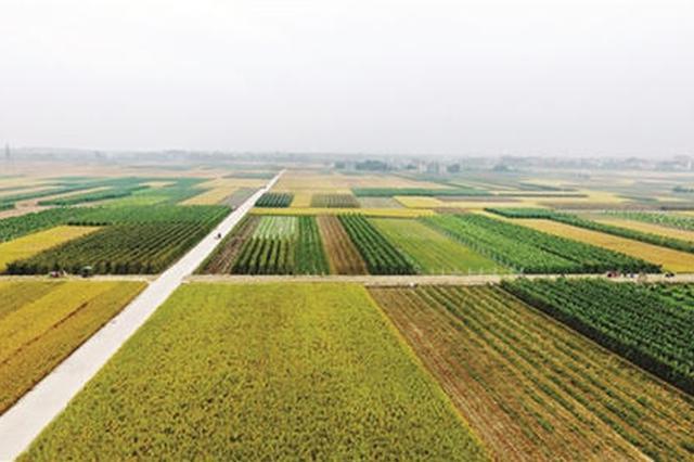 加快乡村振兴步伐 杭州全面开展全域土地综合整治