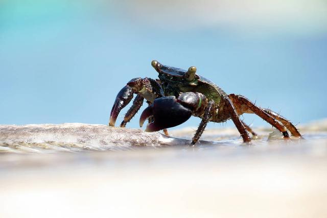 杭州16岁少年肺里长虫 只因四年前吃了几只生螃蟹