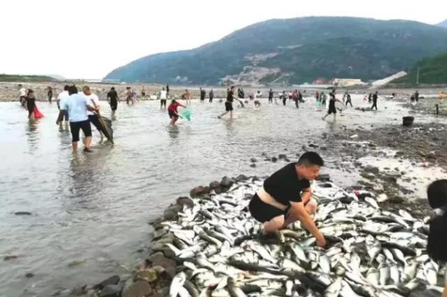 浙江惊现漫天飞鱼 站着就有鱼跳到你的手上