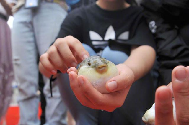 台州百余条剧毒河豚丢失 警民联手惊险搜寻