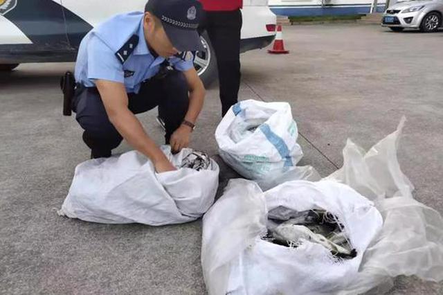 台州1水产公司丢失百余条剧毒河豚 被两名路人捡走