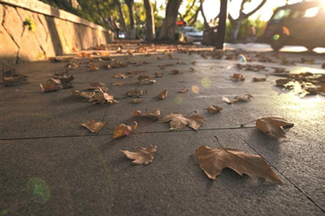秋意越来越浓 杭州今天最低气温只有12℃