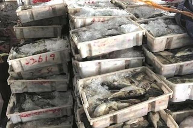 舟山水产城码头查获4吨河豚 摆了一天没人敢认领
