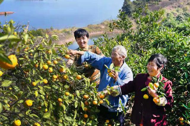 一天双喜临门 杭州淳安橘王老章把橘子卖到加拿大