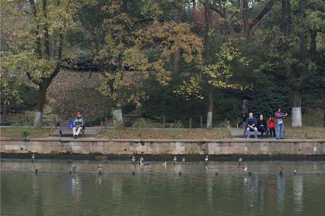 杭州西湖里两小时能看到8种鸟 光是鸳鸯就有200多只