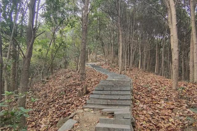 山顶观景台扶手缺失 杭州老人爱爬的这座山没人管了