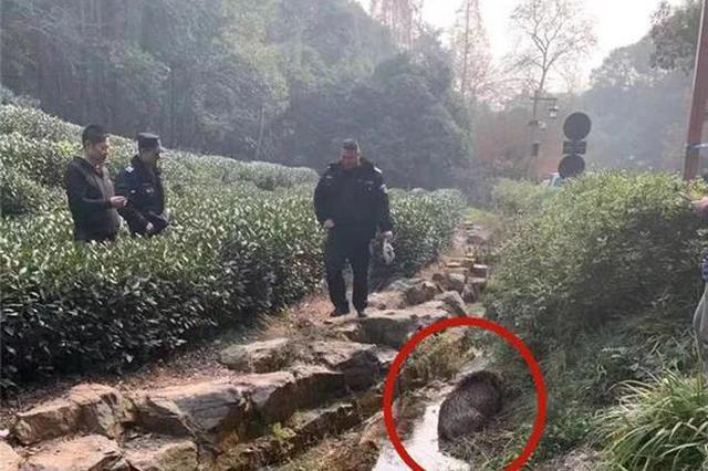 杭两小男孩带着小弓箭去爬山 没想到遇上抓野猪现场
