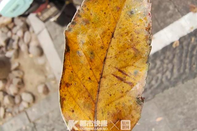 停在杭凤起路地铁口的电动车 每天都有1层黏黏的东西