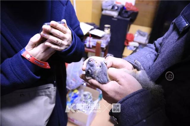 杭州大伯养的3只松鼠出了笼子也不会逃 还会保护主人