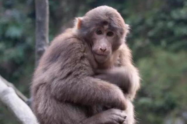 浙男子因任凭7只猎狗咬死一只猴子 被判一年六个月
