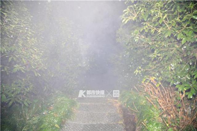 1月15日下午一女子在杭州玉皇山树林跌落 不幸身亡