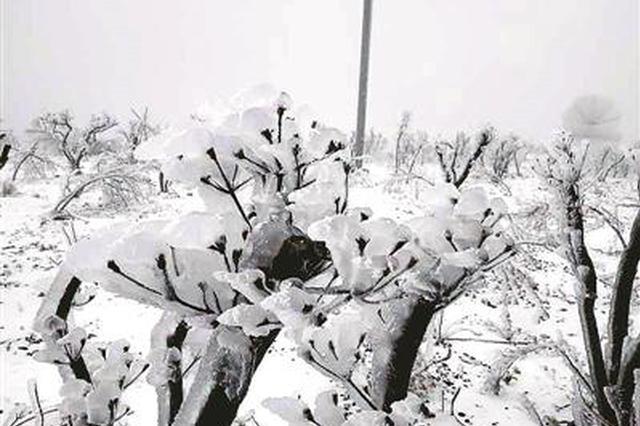昨日杭州部分山区飘起雪花 难得的冰雪世界网友直呼美