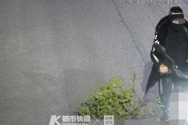 全副武装盗树苗 杭州一村民还没来得及种起来即被抓