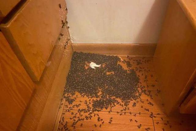 杭1人家白天开窗通风 晚上到家发现密密麻麻全是蜜蜂