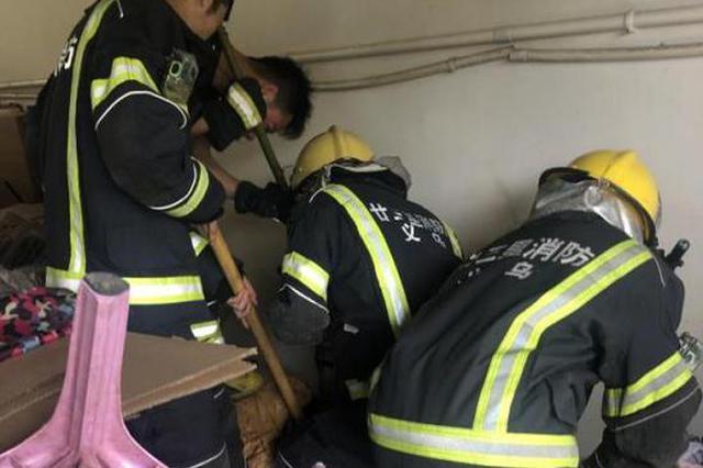 1米多长的眼镜蛇闯入加工厂 浙江消防徒手抓住蛇头