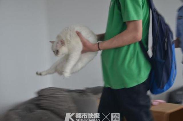 杭州1猫咖因疫情关门数月店主失联 民警上门解救猫咪