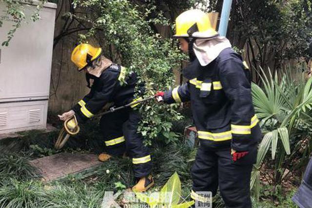 1天内浙消防连续接到2名女子求抓蛇 分别进小区和店铺