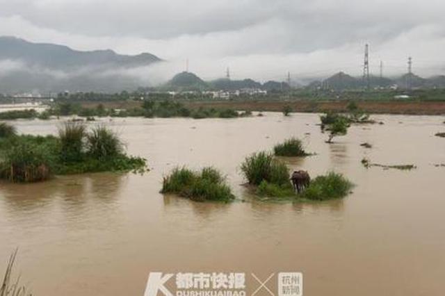 衢州暴雨致价值上万6头骡子被困 消防员开展水中救援