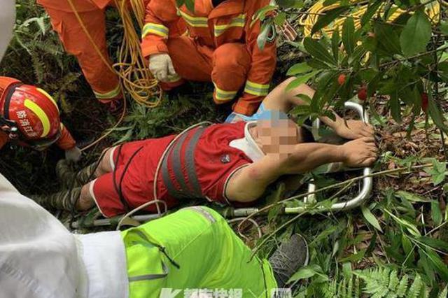 杨梅好吃但注意安全 宁波今年首起因爬杨梅树摔成骨折