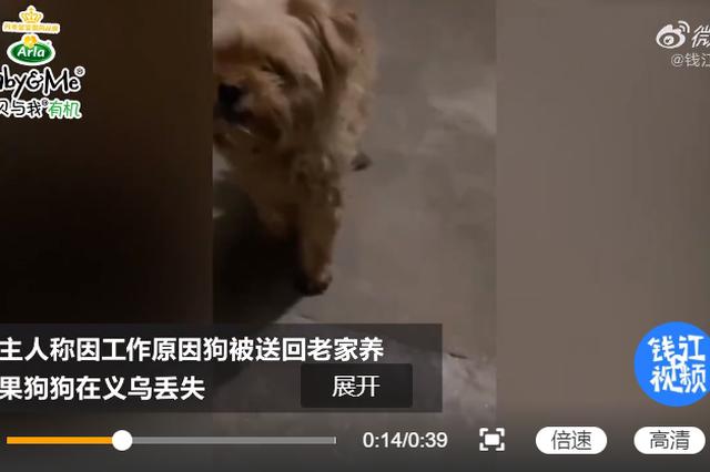 宠物狗丢失1个月后自己找到家