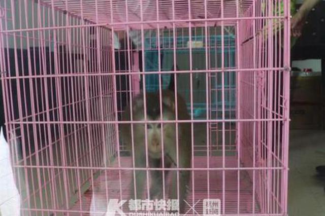 浙1女晒猴牵出非法贩卖野生动物案 目前涉案人已被抓